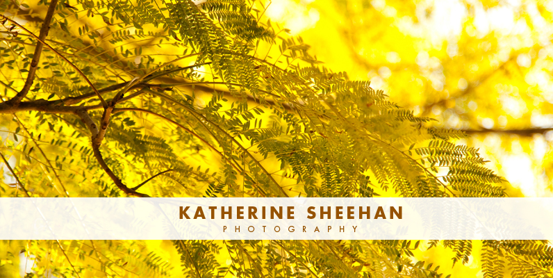 Katherine Sheehan