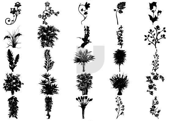 Botanicals 01