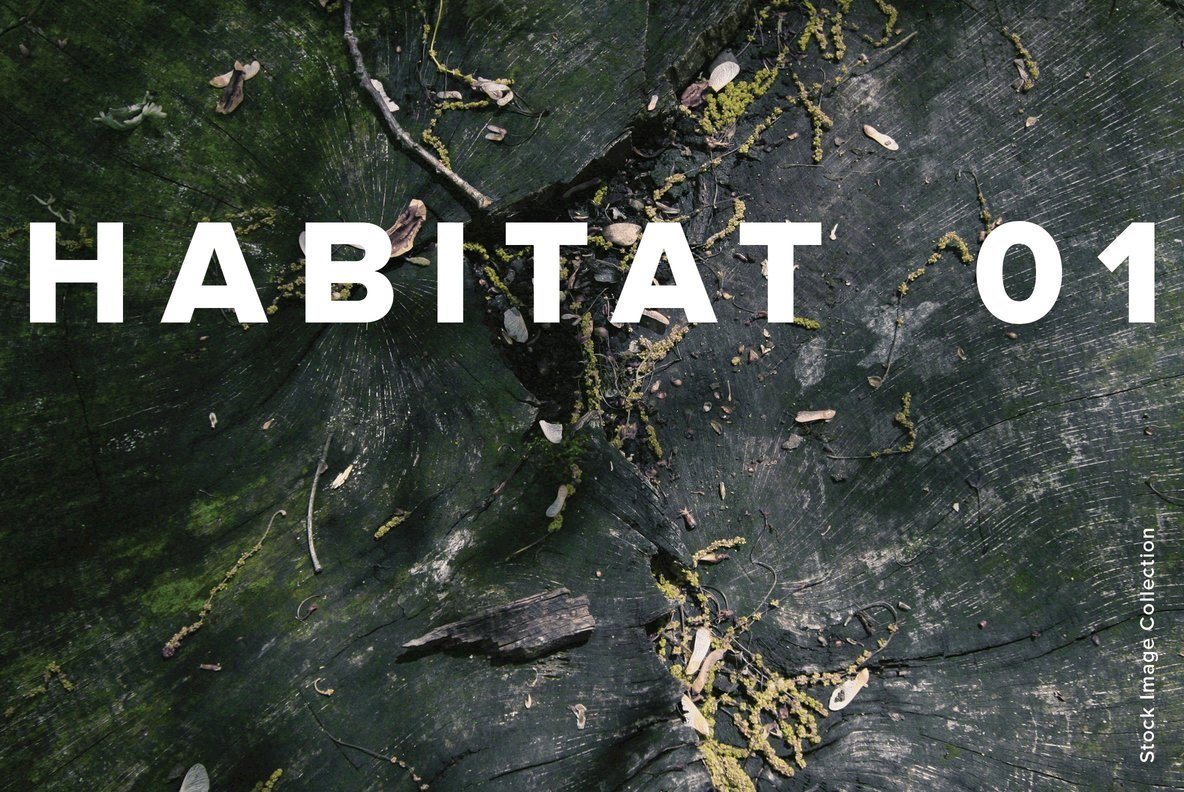 Habitat 01