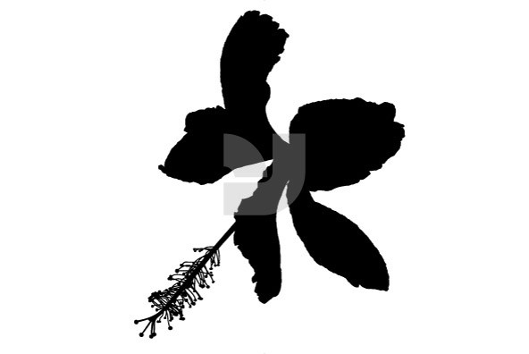 Botanicals 02
