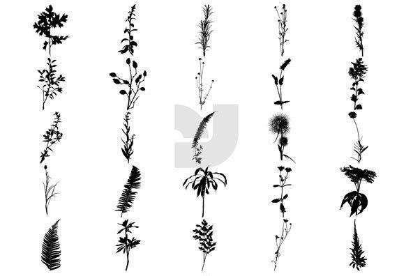 Botanicals 03