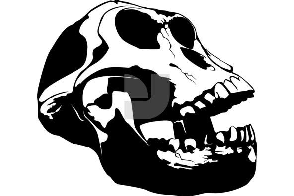 Skullz 05