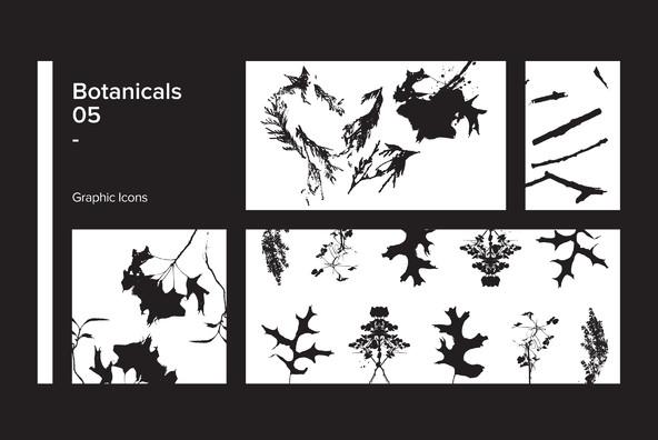 Botanicals 05