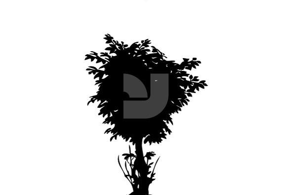 Botanicals 06