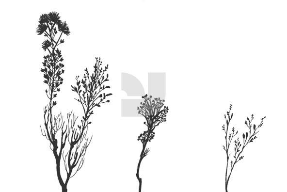 Botanicals 08