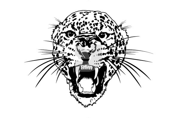 Wild Gatos