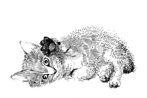Wild Gatos 02