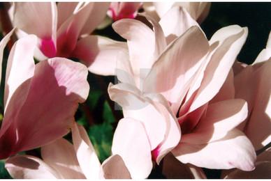 Botanicals 16