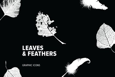 Leaves   Feathers