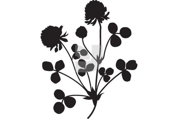 Botanicals 26
