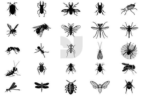 Bugs 06