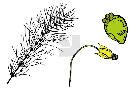 Botanicals 27