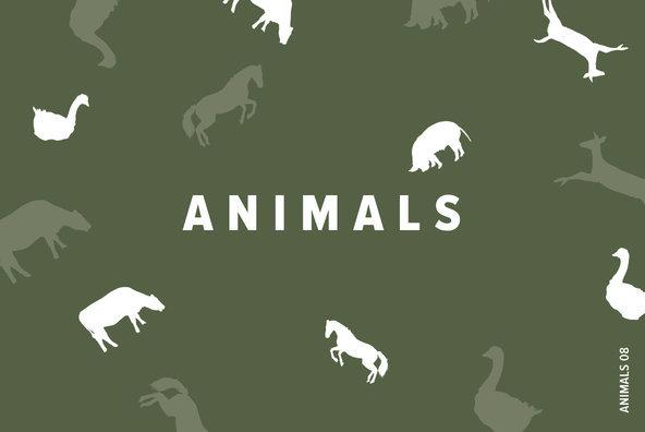 Animals 08