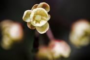 Botanicals 37