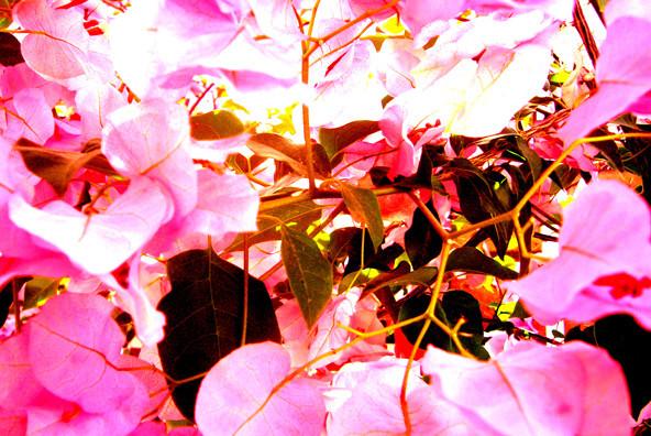 Botanicals 29
