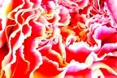 Botanicals 30