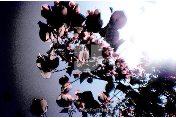 Botanicals 38