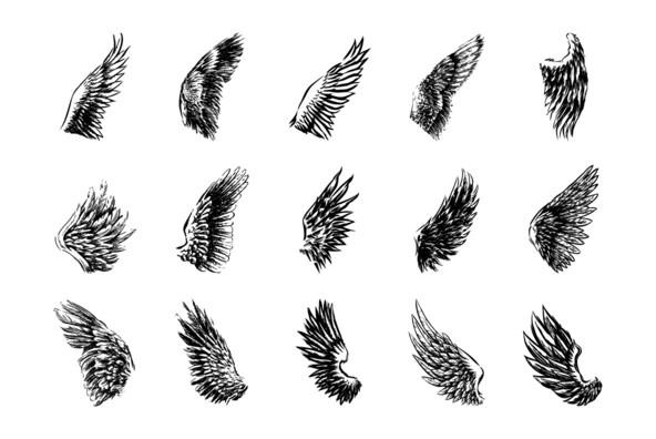 Wings 07