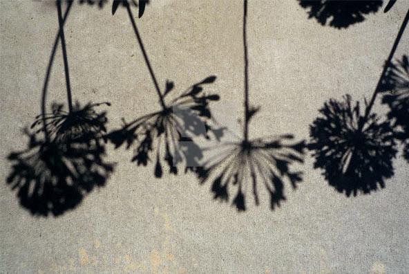 Botanicals 40