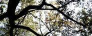 Botanicals Vintage 02