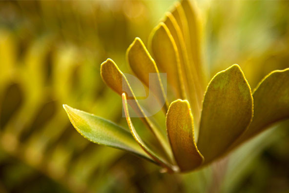 California Botanical