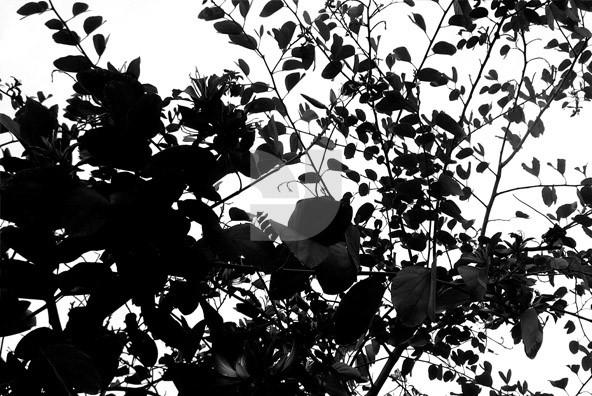 Botanicals Balance