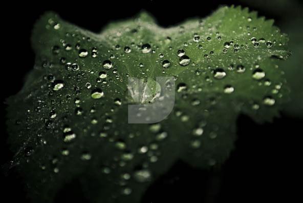 Tears 02