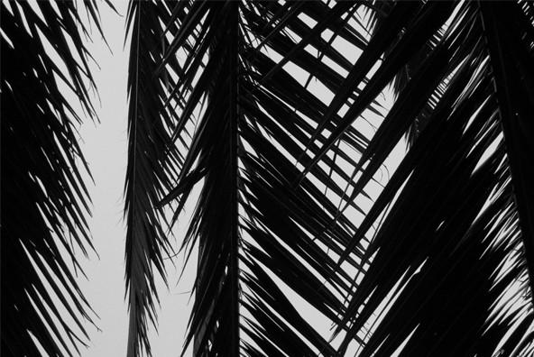 Palms 01