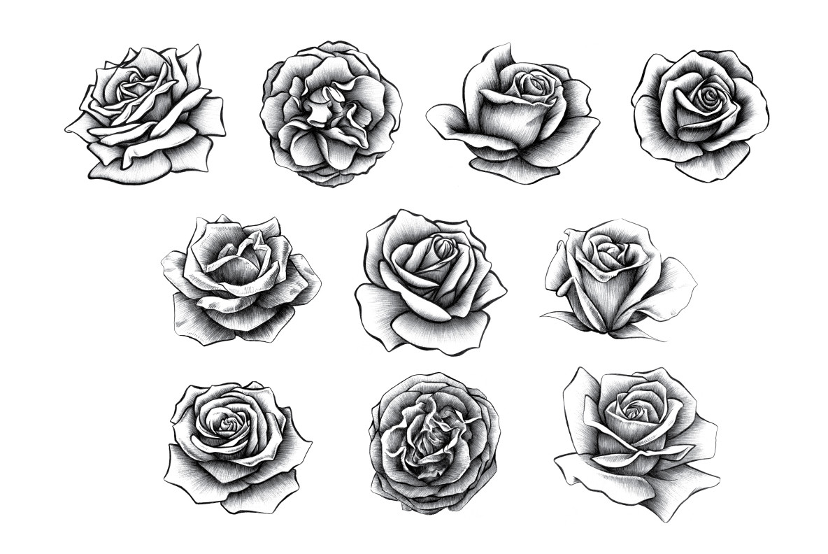 Hand Drawn Rose Collection - Graphics - YouWorkForThem