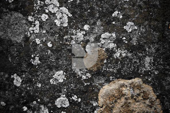 Stonellation