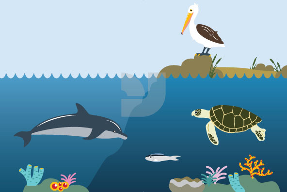 Coastal Sea Life and Offshore Oil Drilling
