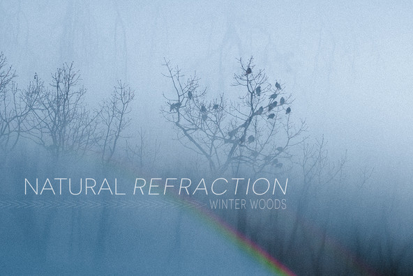Natural Refraction  Winter Woods