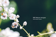 100 Nature Images