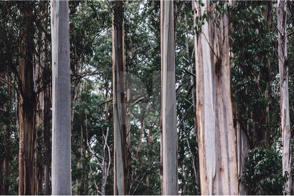 Melbourne Forest