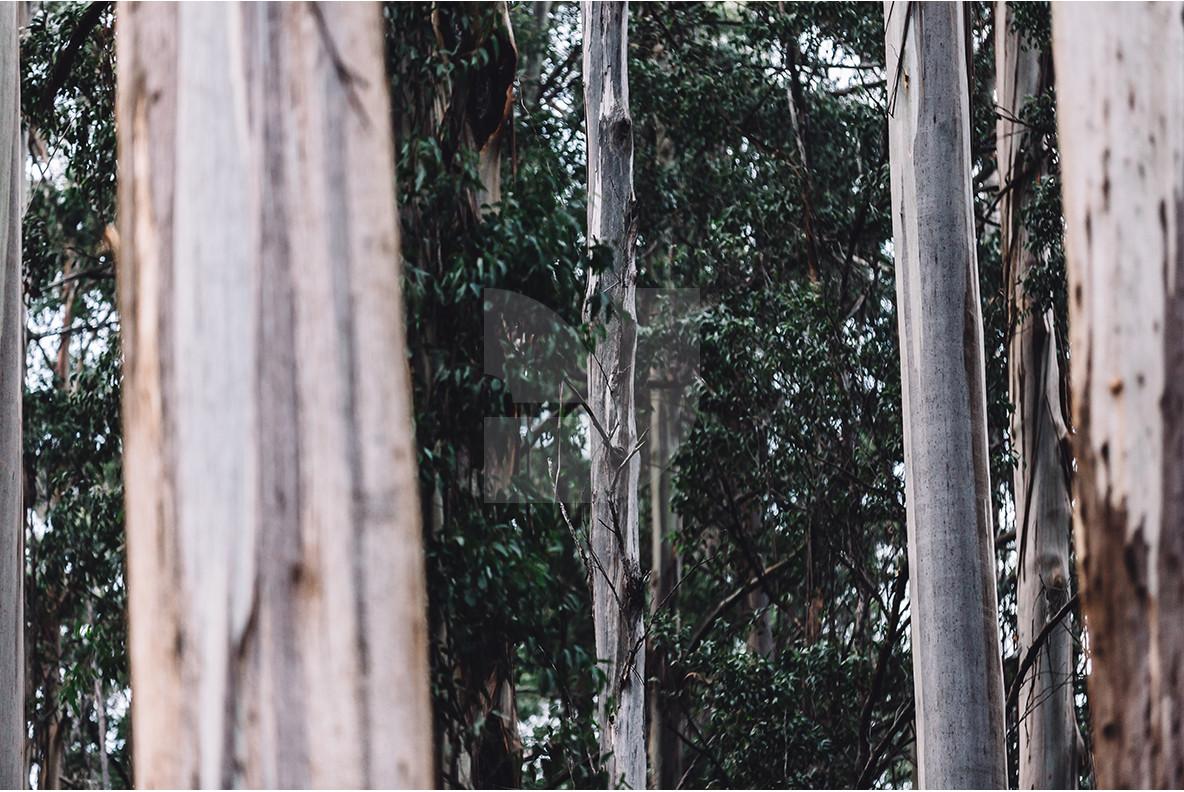 Melbourne Forest