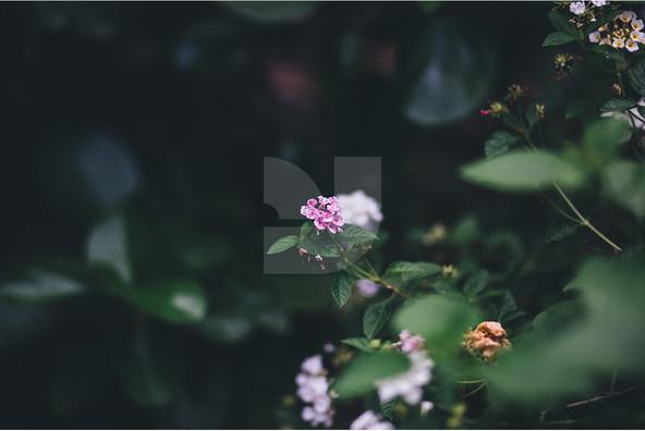 Asian Botanical Images