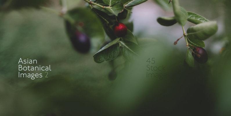 Asian Botanical Images 2