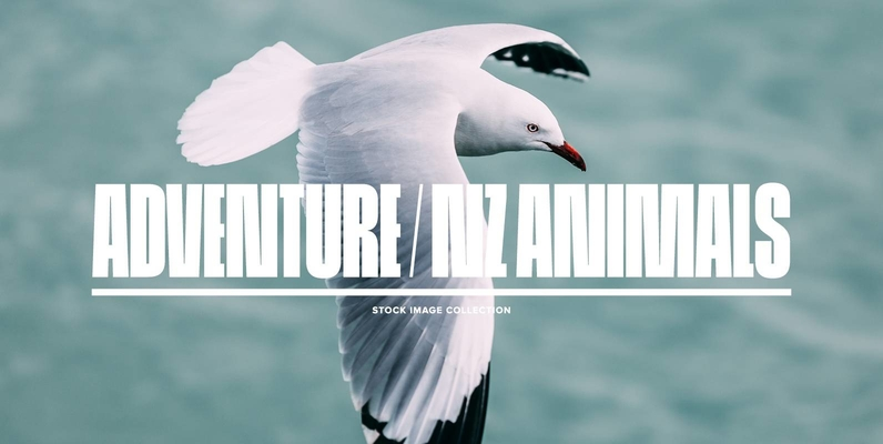 Adventure   NZ Animals