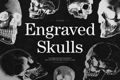 Engraved Skulls Illustrations