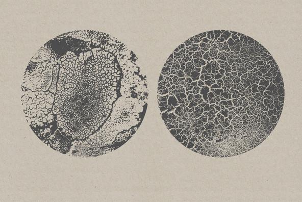 Organic Textures