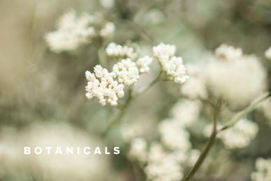 Botanical Collection 1