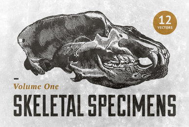 Skeletal Specimens Vol 1