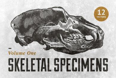 Skeletal Specimens Vol 1