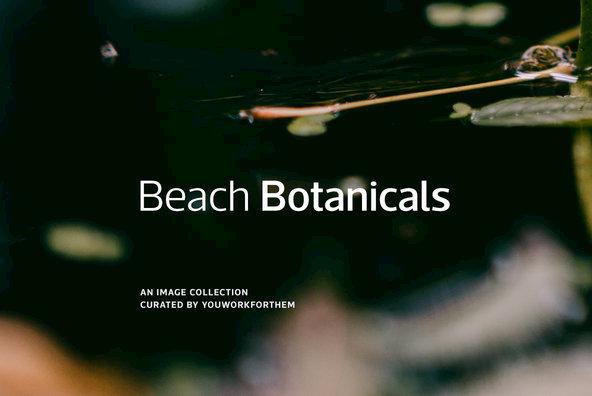 Beach Botanicals