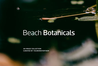 Beach Botanicals