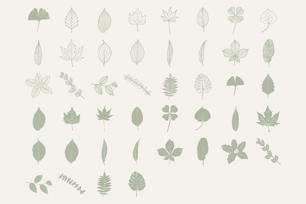 HandDrawn Leaf Library