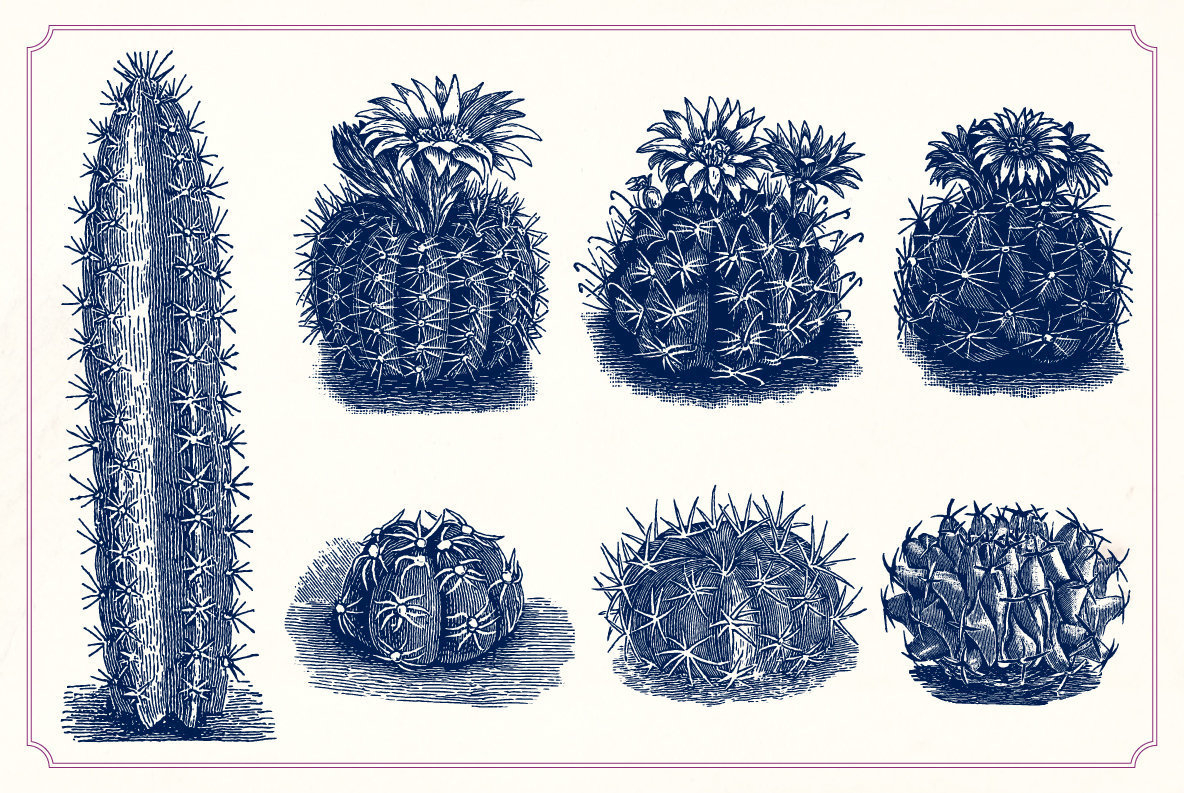 Vintage Cacti and Succulents