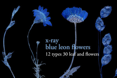 X Ray Blue Leon Flowers Set