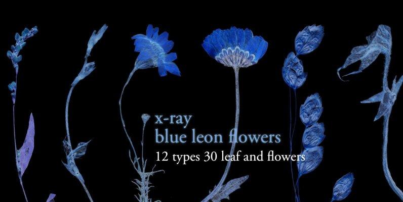 X Ray Blue Leon Flowers Set