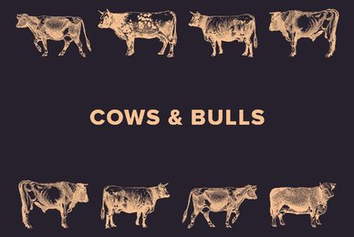 Cows  Bulls
